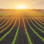 Plusieurs programmes d'aide sont mis à la disposition des entrepreneurs agricoles
