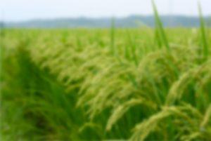 Achat d'équipement agricole