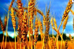 Achat de terres agricoles