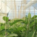 Ressources financières disponibles pour la production horticole